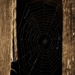 Stock Photo: Spider web