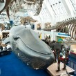 Stock Photo: Blue zone of Natural History Museum
