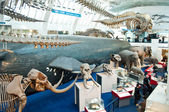 Blue zone of Natural History Museum — Stock Photo