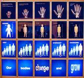 Evolução do corpo — Foto Stock