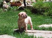 Cachorro atento — Foto de Stock