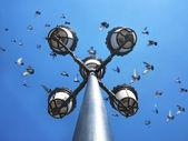 Verstrooiing van duiven op lantaarns — Stockfoto