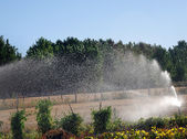 Irrigation in cultivated field 4 — Stock Photo