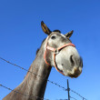 Foto de Stock  : Grey horse head