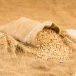 Stock Photo: Wheat isolated