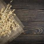 Oat cereal grain — Stock Photo
