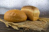 Pan de grano entero — Foto de Stock
