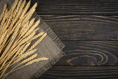 Wheat isolated — Stock Photo