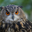 Eagle Owl — Stock Photo #34540167