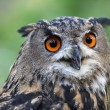 Eagle Owl — Stock Photo #34540299