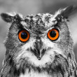 Eagle Owl Portrait — Stock Photo