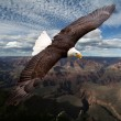American eagle — Stock Photo #34639829