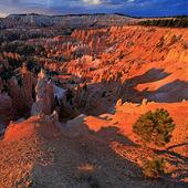 Bryce canyon national park, nello utah, usa — Foto Stock