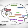 Human Brain Animation - Stock Photo