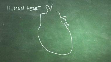 Human Heart Animation — Stock Video