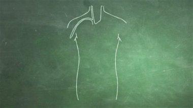 Human Organs Animation — Stockvideo