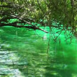 Crystal Clear Lake Shore — Vídeo de stock