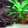 Aquarium , fishtank timelapse. - Stock Photo