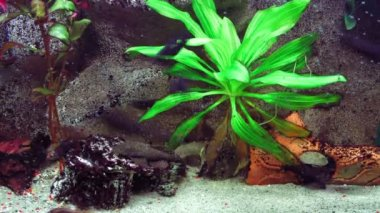 Aquarium , fishtank timelapse. — Stok video