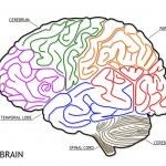 das menschliche Gehirn-Struktur — Stockfoto