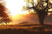 Autumn Sunset Sunrise at Lake 3D render — Stock Photo