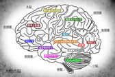 The human brain structure in Japanese — Stock Photo