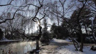 Lake in Winter Park — Stock Video