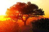 Garden of Herbs and Summer Cherry Tree Sunset Sunrise 3D render — Stock Photo