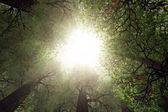 Looking Up from Deep Forest 3D render — Stock Photo
