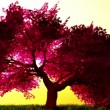 Magical cherry tree, 3D render - Stock Photo