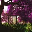 Stock Video: Mysterious cherry blossoms japanese garden cartoony 3D render