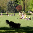 Park at spring, May 2010, Germany — Stock Video