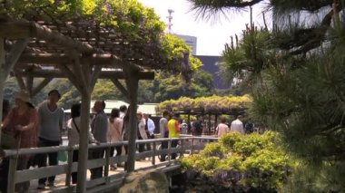 Walking in japanese garden — Stockvideo