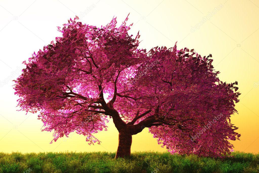 樱花树 02 — 图库照片08boscorelli#9107075图片