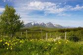 Summer on Lofoten — Stock Photo