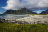 Beach on Lofoten — 图库照片
