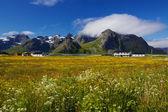 Summer in Norway — Stock Photo