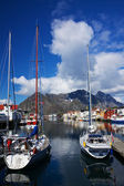 Yachts sur lofoten — Photo