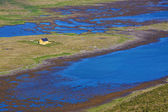 Lone house in marshes — Stock Photo