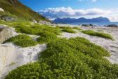 Malerische strand auf den lofoten — Stockfoto