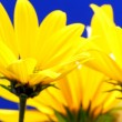 Foto Stock: Bouquet of yellow flowers