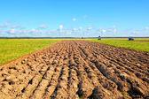 Farmer field — Stock Photo
