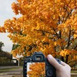 Photography autumn — Stock Photo