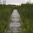Wooden footpath - Stock Photo