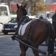 Horse and carriage in the city — Stock Photo #14887765