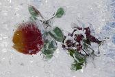 Buzun içinde donmuş meyve — Stok fotoğraf