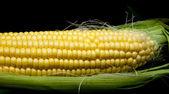 黑玉米 — 图库照片