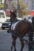 Cavalo e a carruagem na cidade — Foto Stock