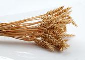 Wheat ears — Stock Photo