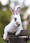 Tavşan — Stok fotoğraf